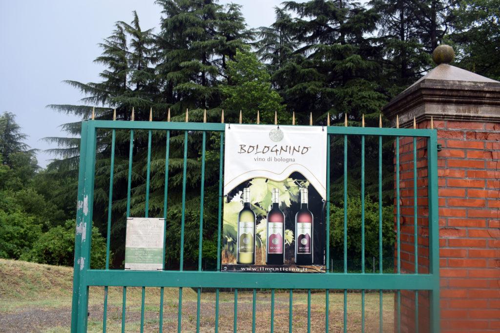 Bolognino vino colli bolognesi Monticino