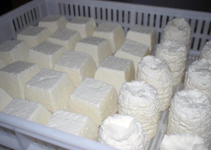 Degustazione di formaggi all'open day caseifici agricoli